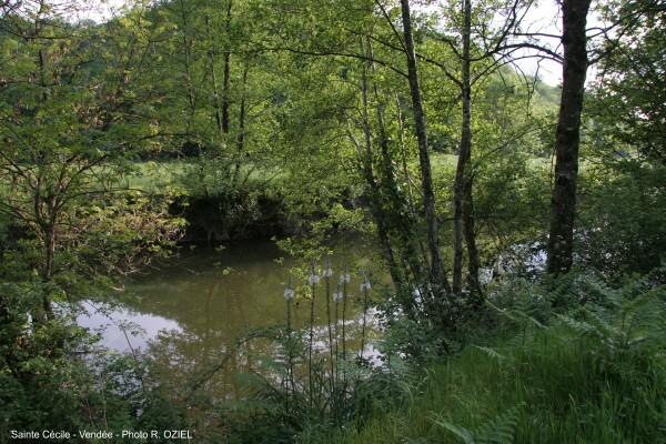 Rivière de sainte cécile en Vendée