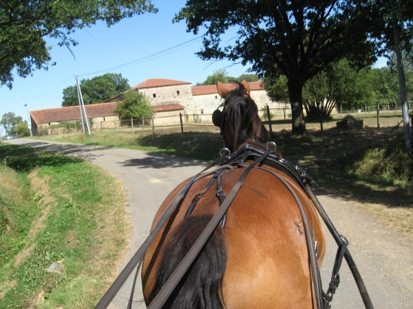 Gîte avec pension cheval